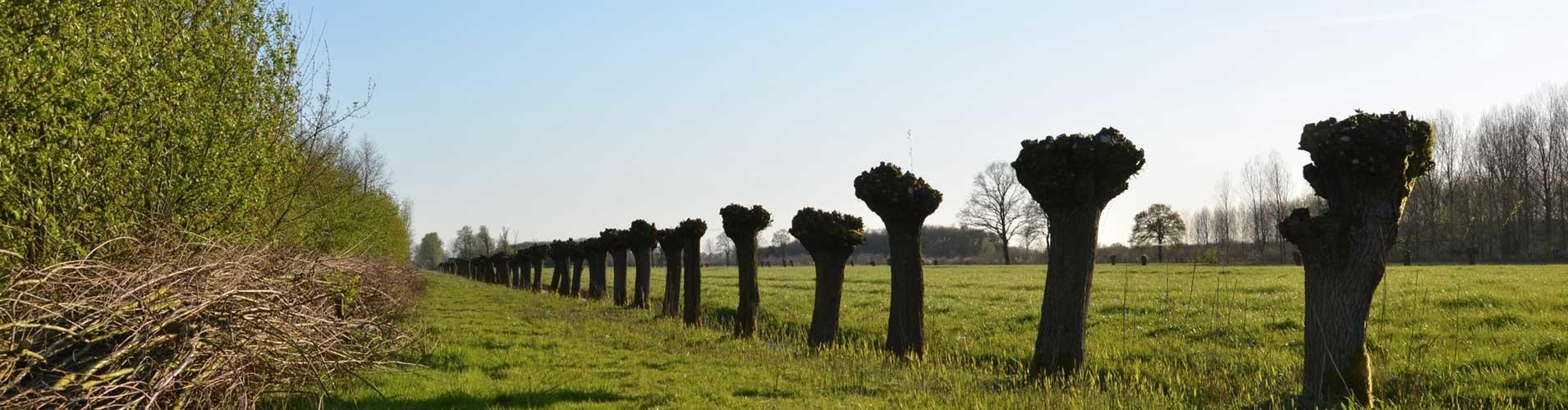 geknotte bomen